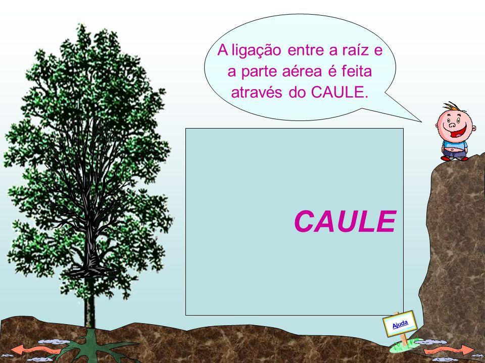 A ligação entre a raíz e a parte aérea é feita através do CAULE.