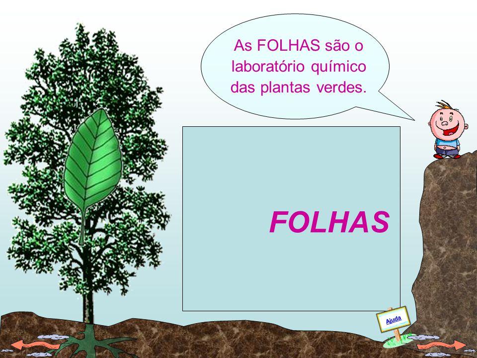 As FOLHAS são o laboratório químico das plantas verdes.