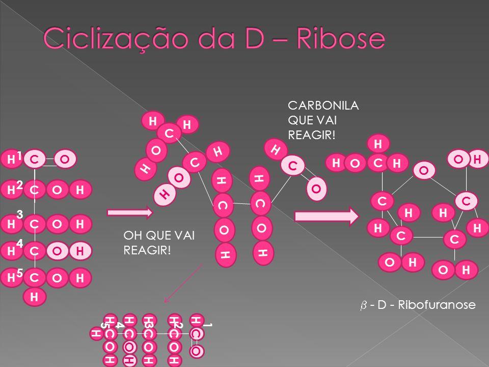 Ciclização da D – Ribose