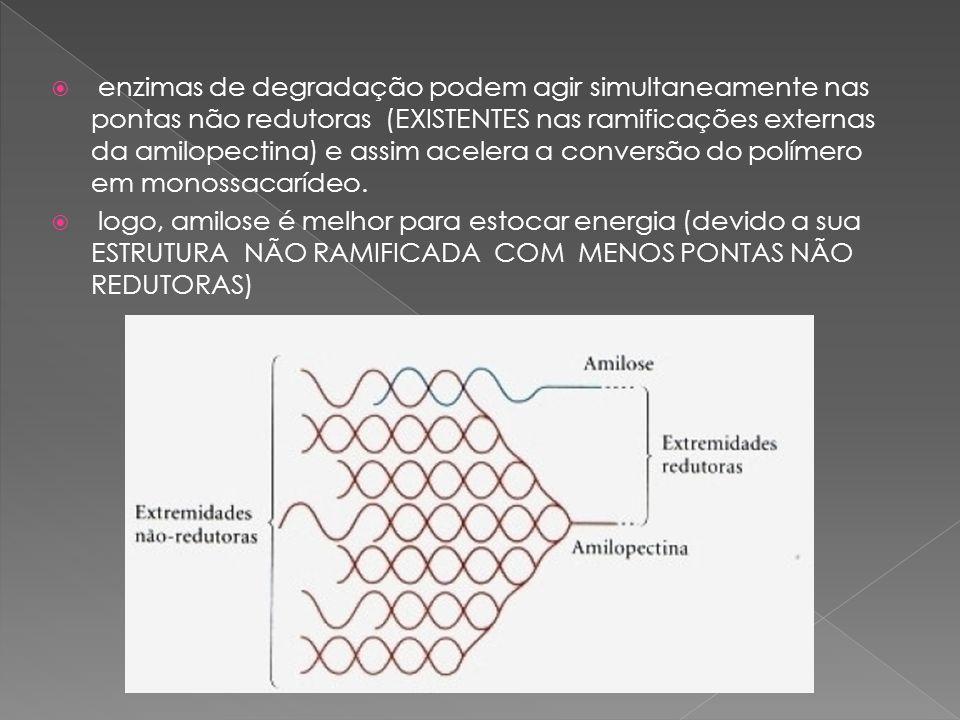 enzimas de degradação podem agir simultaneamente nas pontas não redutoras (EXISTENTES nas ramificações externas da amilopectina) e assim acelera a conversão do polímero em monossacarídeo.