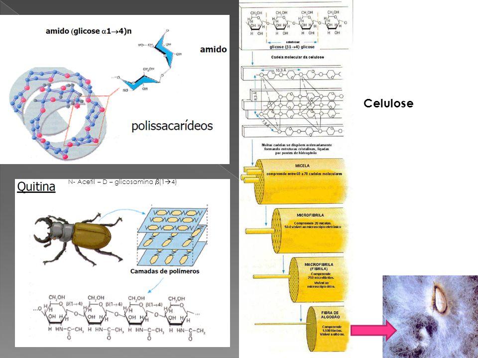 Celulose N- Acetil – D – glicosamina (14)