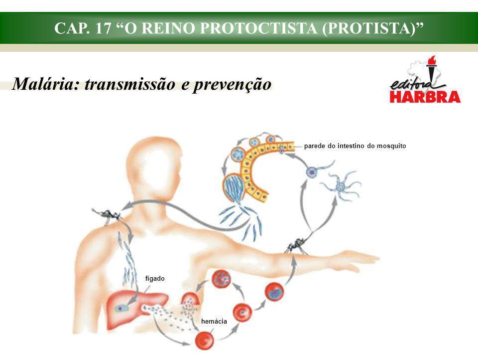 CAP. 17 O REINO PROTOCTISTA (PROTISTA)
