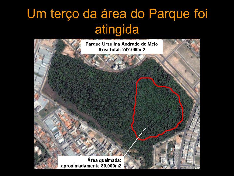 Um terço da área do Parque foi atingida