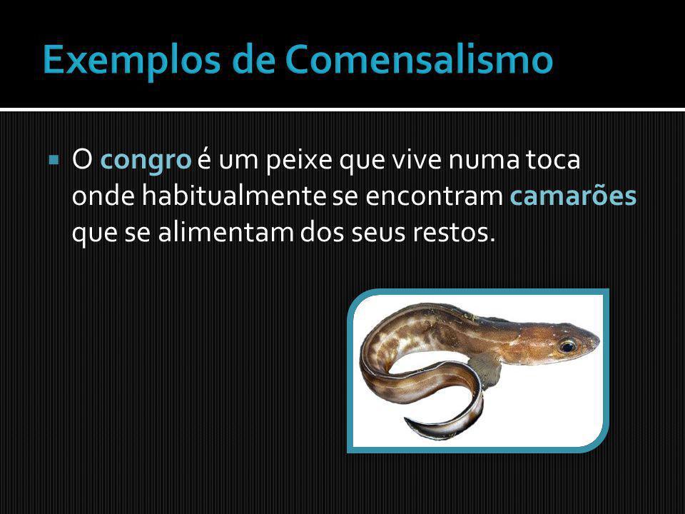 Exemplos de Comensalismo