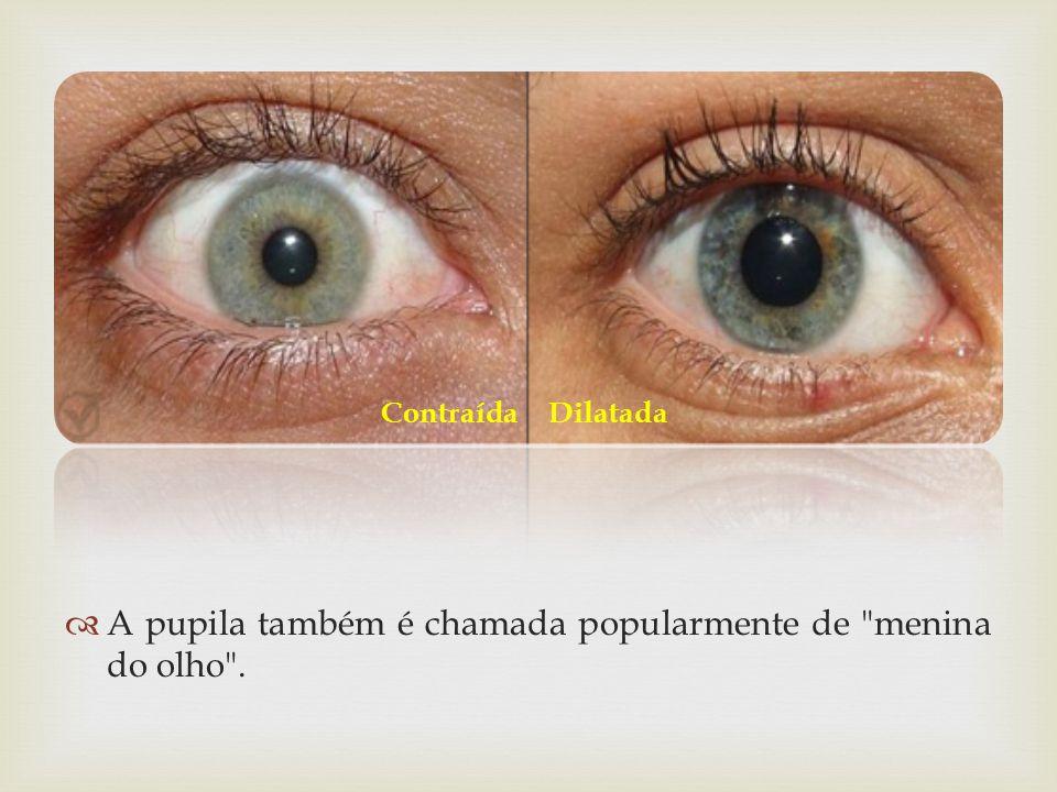 A pupila também é chamada popularmente de menina do olho .