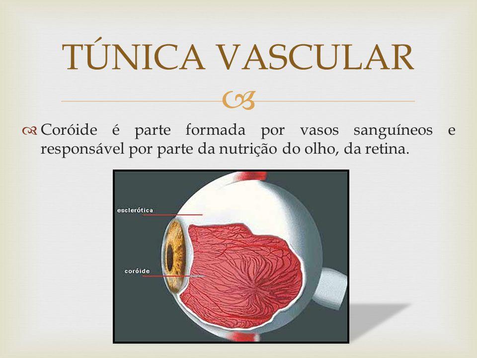 TÚNICA VASCULAR Coróide é parte formada por vasos sanguíneos e responsável por parte da nutrição do olho, da retina.