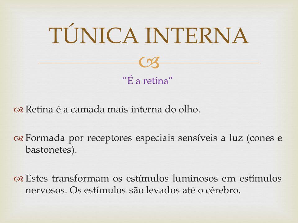TÚNICA INTERNA É a retina Retina é a camada mais interna do olho.