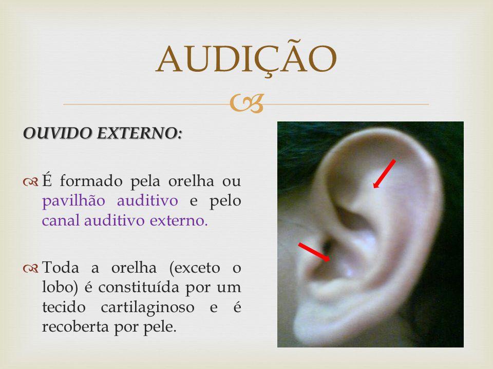 AUDIÇÃO OUVIDO EXTERNO:
