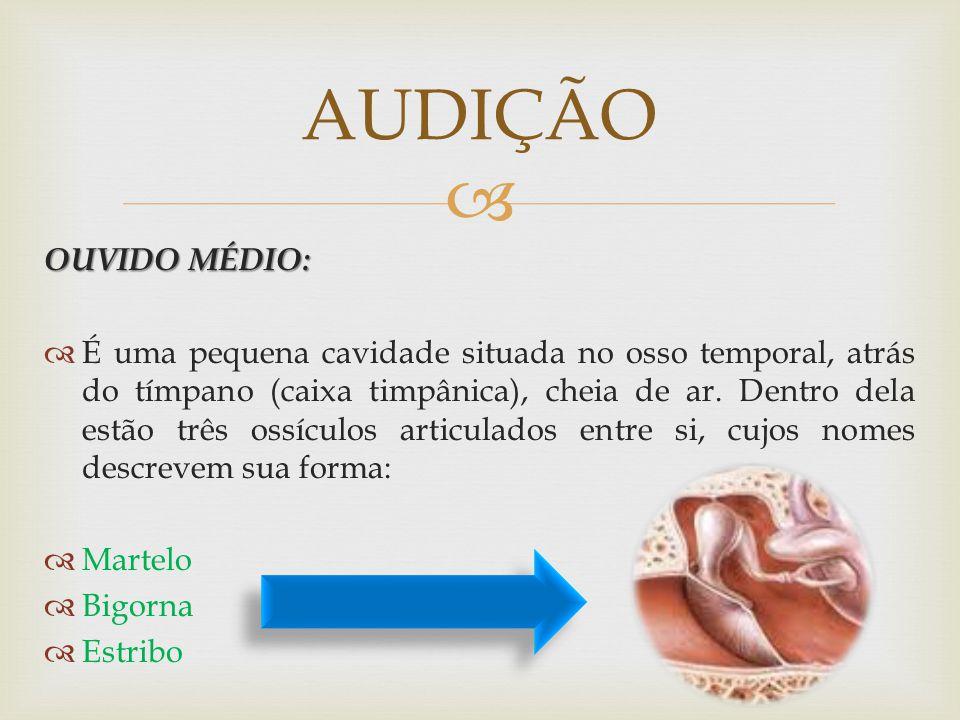 AUDIÇÃO OUVIDO MÉDIO: