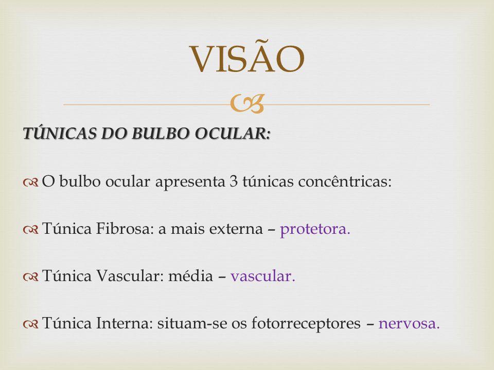 VISÃO TÚNICAS DO BULBO OCULAR: