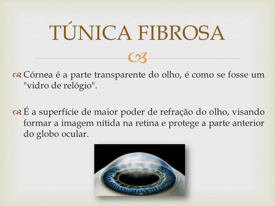 TÚNICA FIBROSA Córnea é a parte transparente do olho, é como se fosse um vidro de relógio .