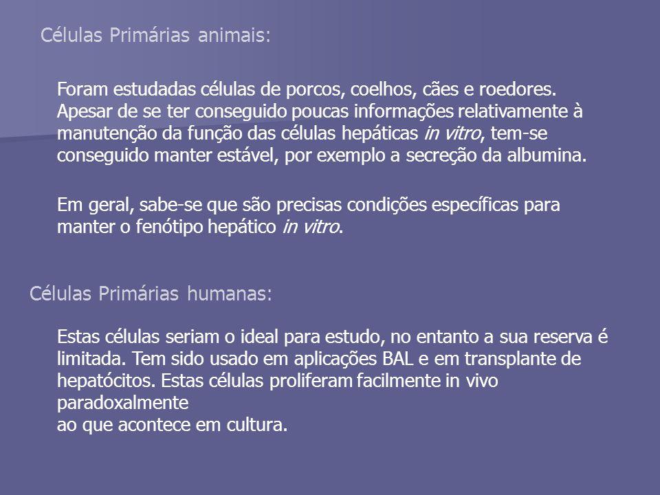 Células Primárias animais: