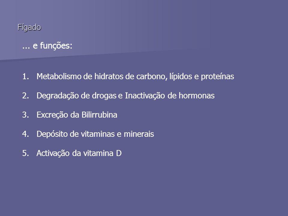 Fígado ... e funções: Metabolismo de hidratos de carbono, lípidos e proteínas. Degradação de drogas e Inactivação de hormonas.