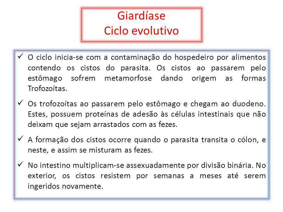 Giardíase Ciclo evolutivo