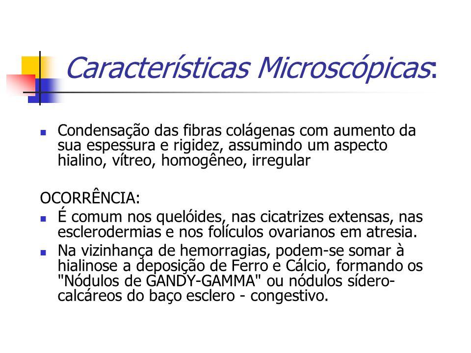 Características Microscópicas: