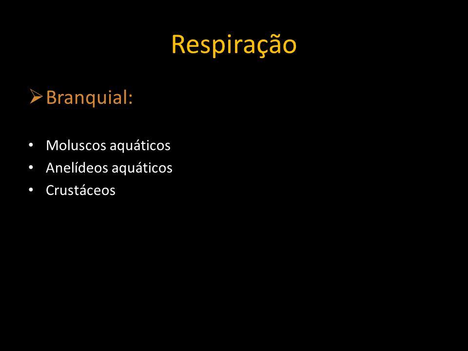 Respiração Branquial: Moluscos aquáticos Anelídeos aquáticos