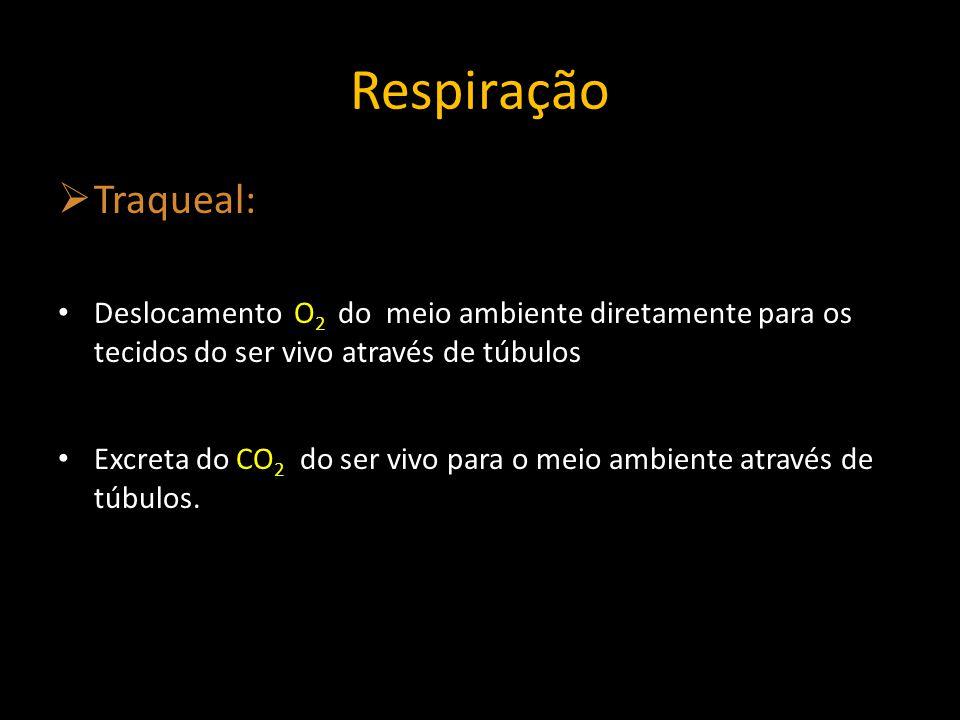 Respiração Traqueal: Deslocamento O2 do meio ambiente diretamente para os tecidos do ser vivo através de túbulos.