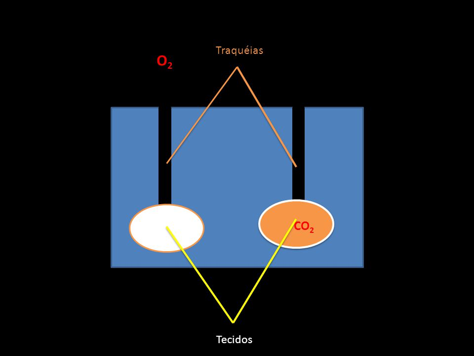 Traquéias O2 CO2 Tecidos