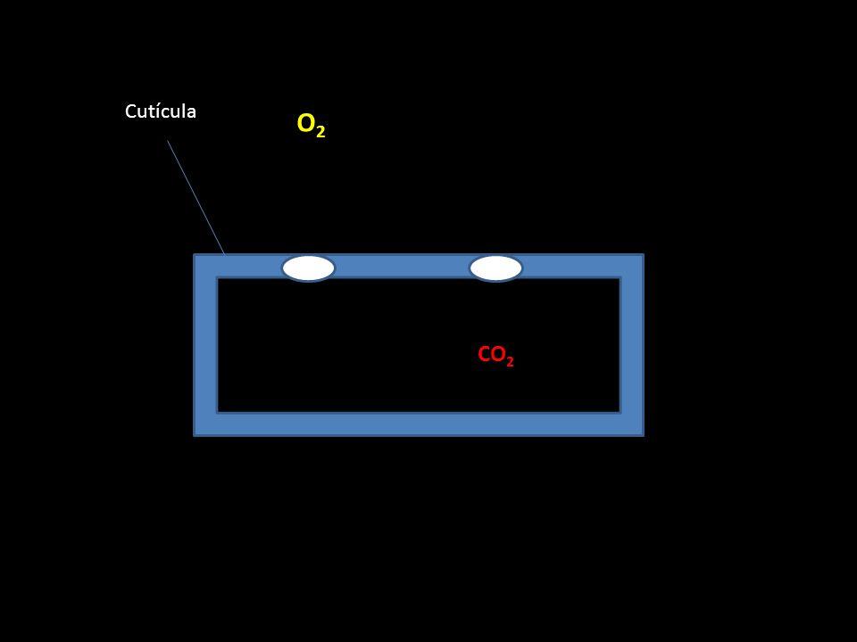 Cutícula O2 CO2