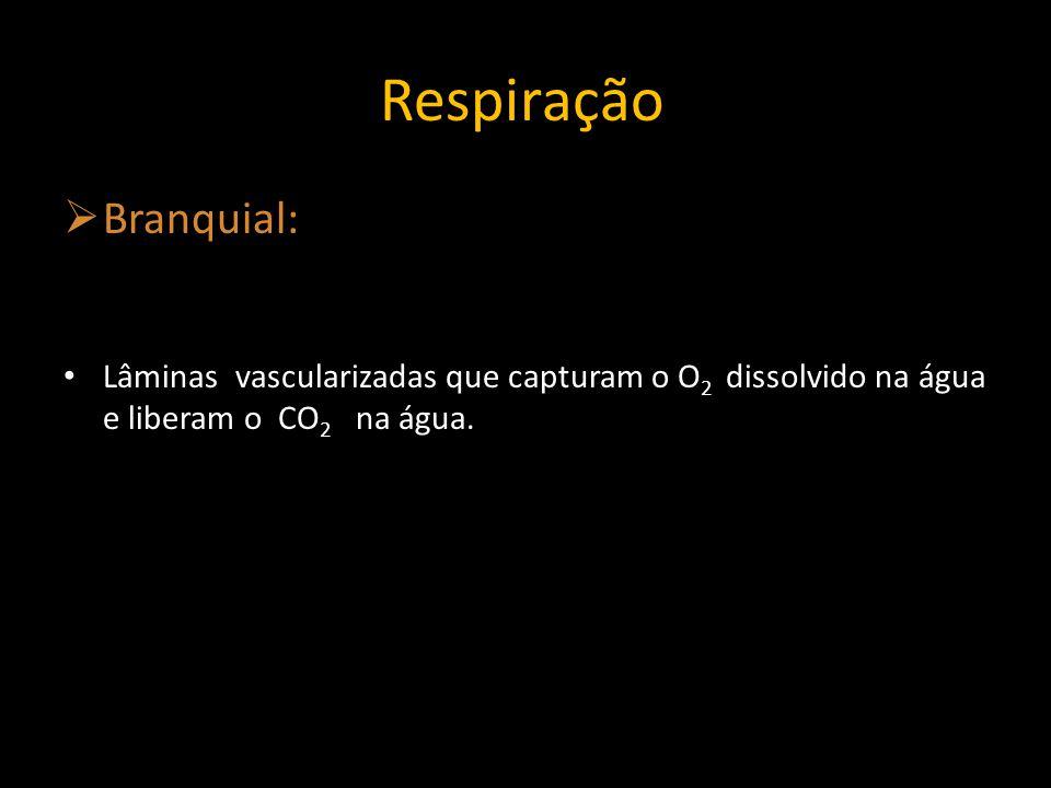 Respiração Branquial: