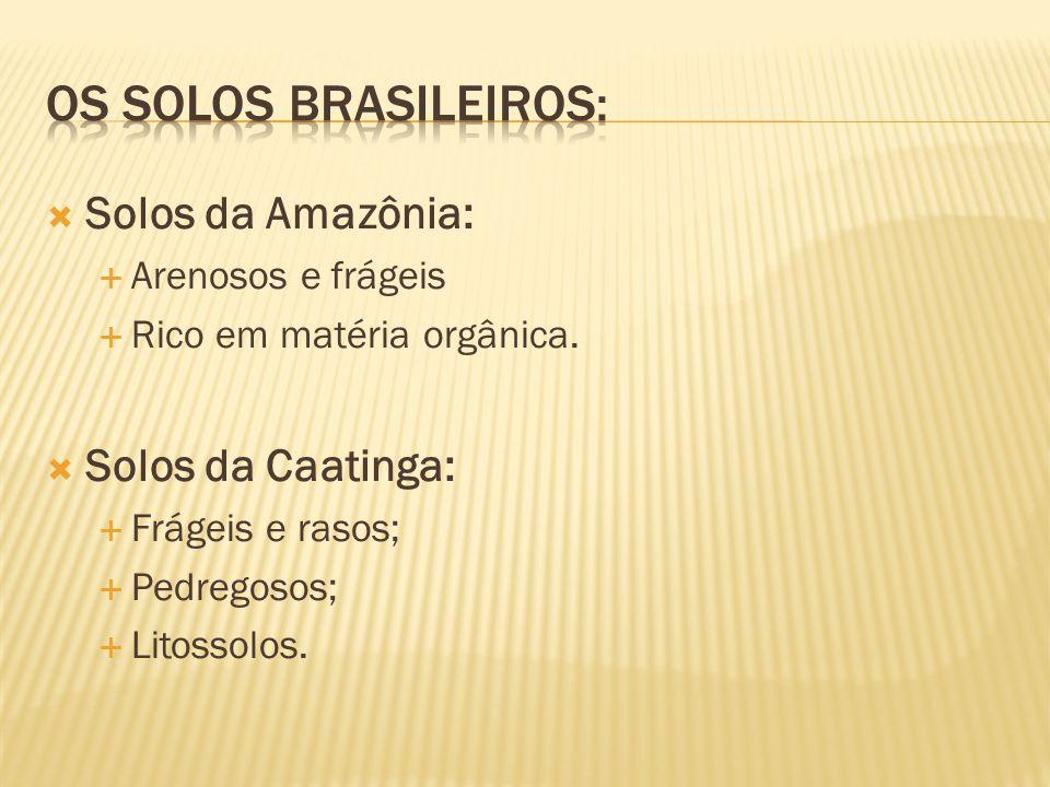 Os solos brasileiros: Solos da Amazônia: Solos da Caatinga:
