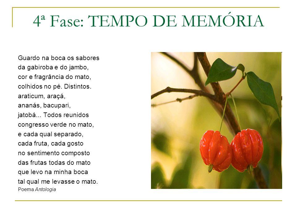 4ª Fase: TEMPO DE MEMÓRIA