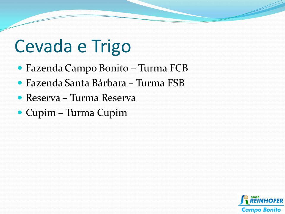 Cevada e Trigo Fazenda Campo Bonito – Turma FCB
