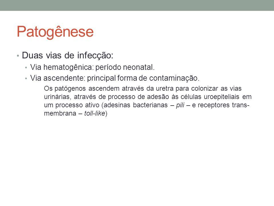 Patogênese Duas vias de infecção: Via hematogênica: período neonatal.