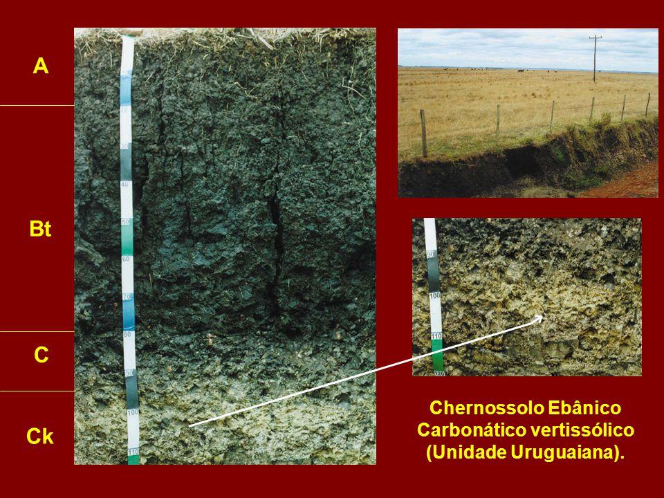 Chernossolo Ebânico Carbonático vertissólico