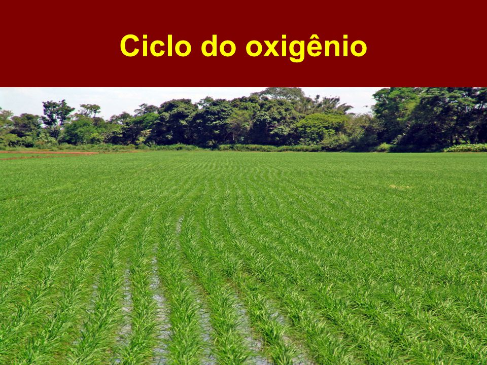 Ciclo do oxigênio