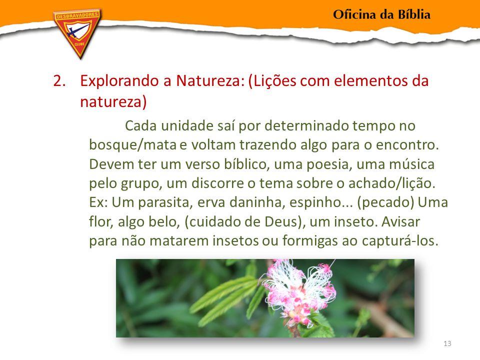 Explorando a Natureza: (Lições com elementos da natureza)
