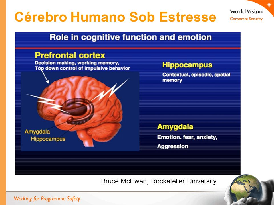 Cérebro Humano Sob Estresse