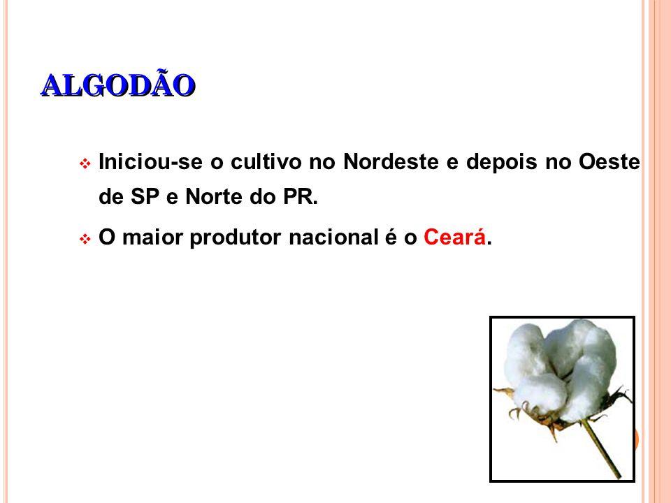 ALGODÃO Iniciou-se o cultivo no Nordeste e depois no Oeste de SP e Norte do PR.