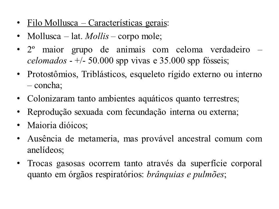 Filo Mollusca – Características gerais: