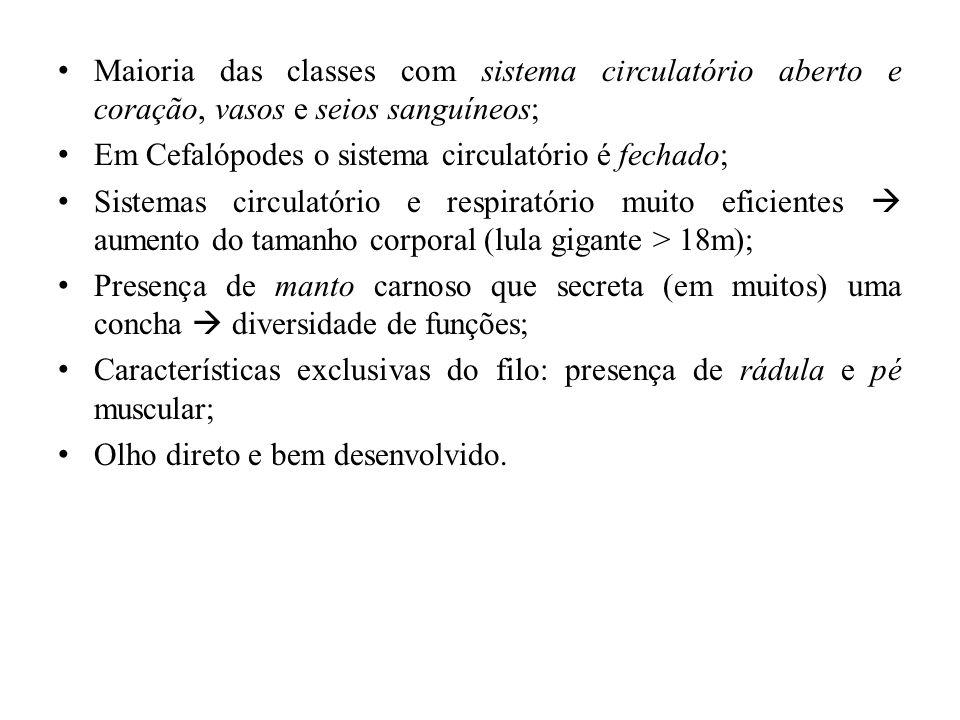 Maioria das classes com sistema circulatório aberto e coração, vasos e seios sanguíneos;