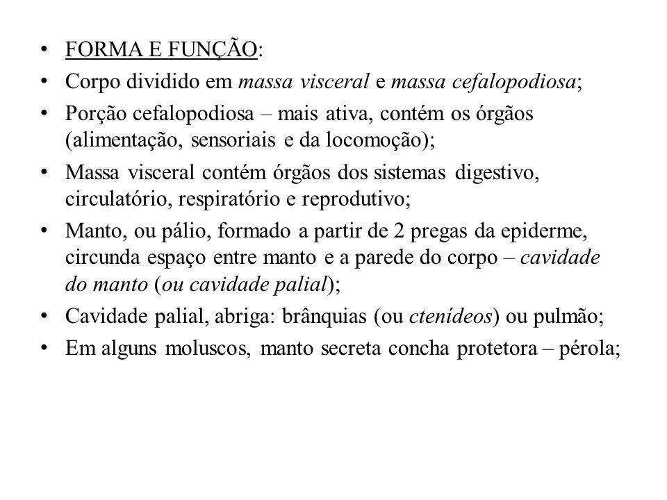 FORMA E FUNÇÃO: Corpo dividido em massa visceral e massa cefalopodiosa;