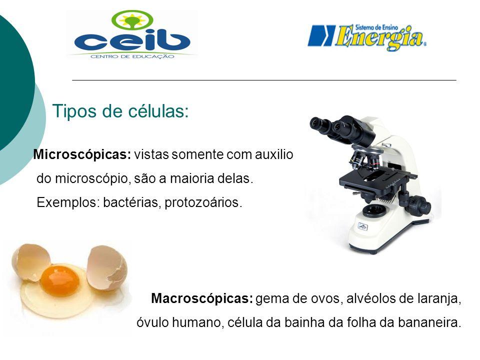 Tipos de células: Microscópicas: vistas somente com auxilio