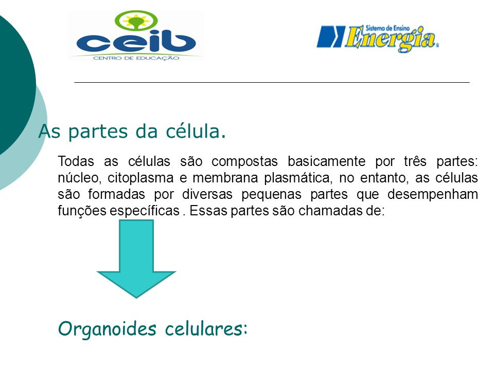 Organoides celulares: