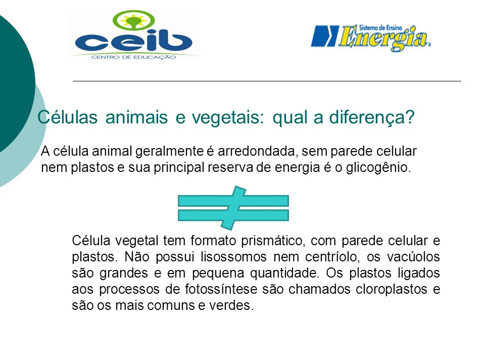 Células animais e vegetais: qual a diferença