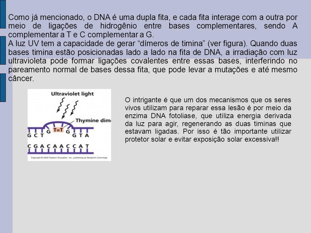 Como já mencionado, o DNA é uma dupla fita, e cada fita interage com a outra por meio de ligações de hidrogênio entre bases complementares, sendo A complementar a T e C complementar a G.