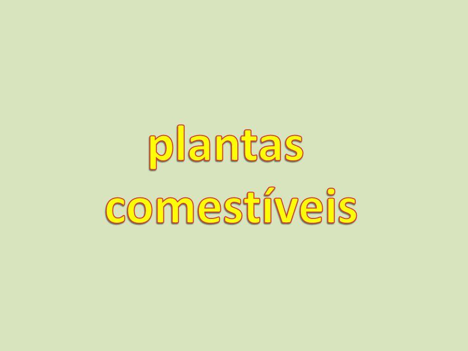 plantas comestíveis