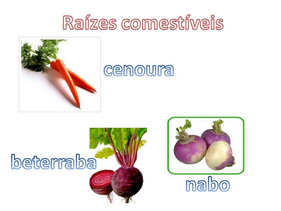 Raízes comestíveis cenoura beterraba nabo