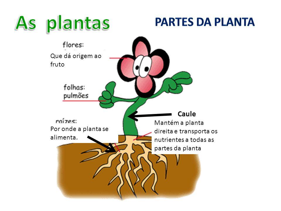 As plantas Partes da planta Caule Que dá origem ao fruto