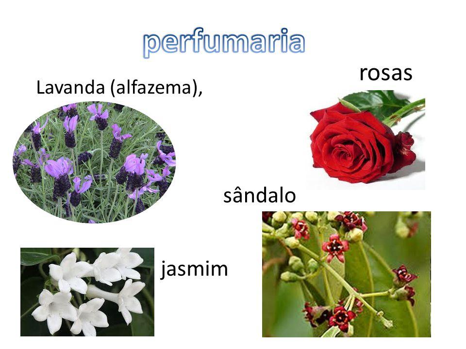 perfumaria rosas Lavanda (alfazema), sândalo jasmim