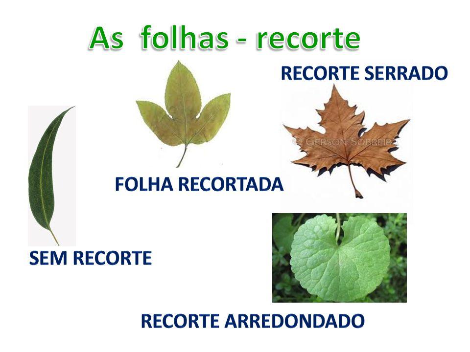 As folhas - recorte Recorte serrado Folha recortada Sem recorte