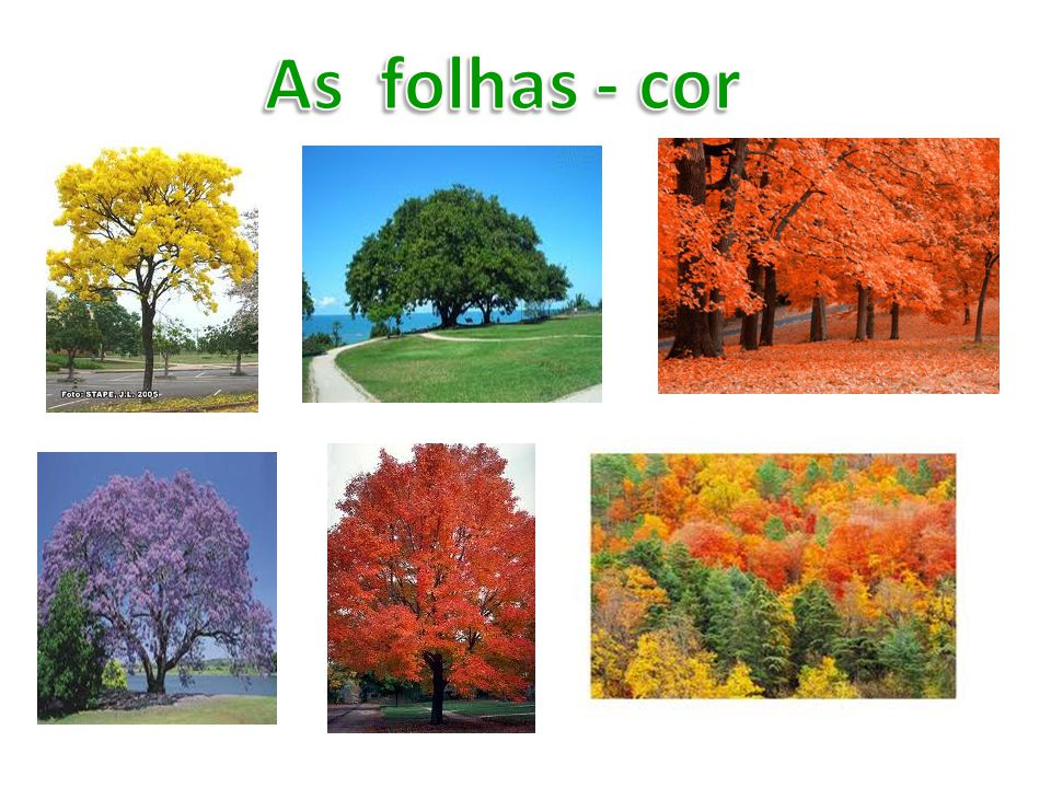 As folhas - cor