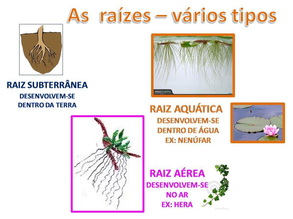 As raízes – vários tipos