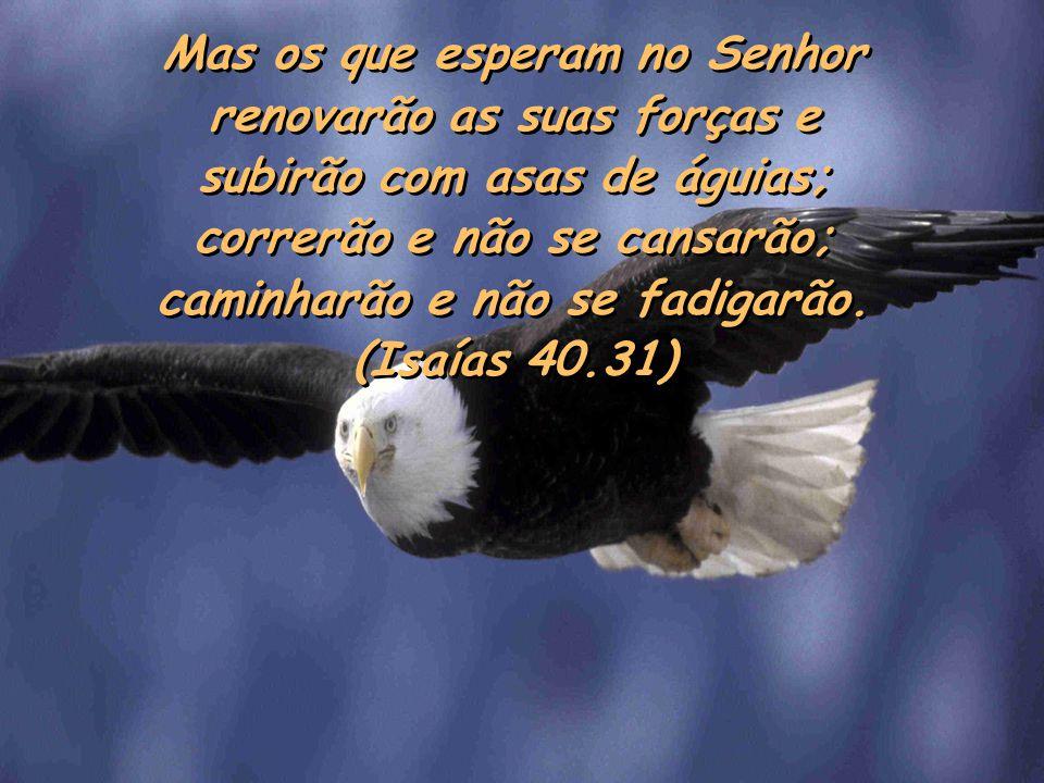 Mas os que esperam no Senhor renovarão as suas forças e