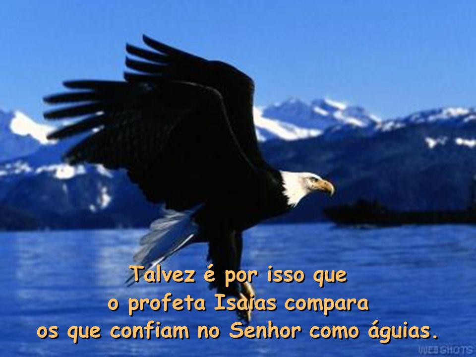 o profeta Isaias compara os que confiam no Senhor como águias.