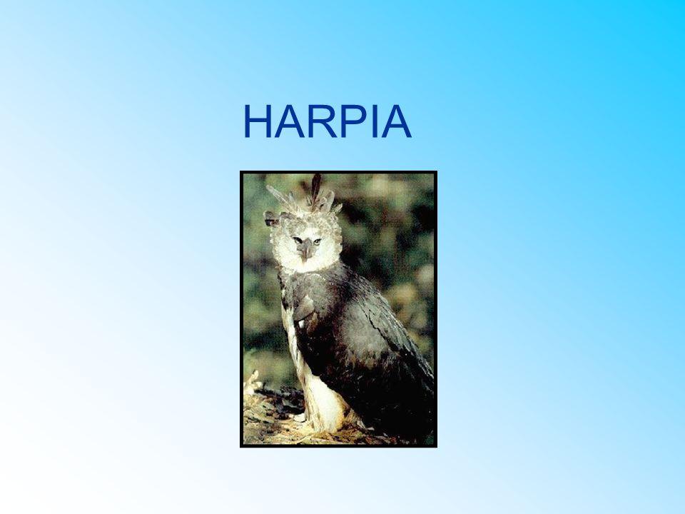 HARPIA